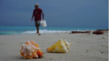 Райский отдых на Кубе: главные курорты, информация о стране