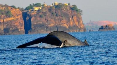Trincomalee (Sri Lanka)