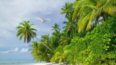 Fakaifou Village (Tuvalu)